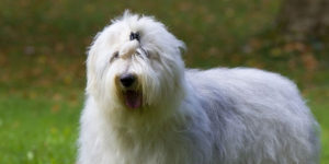 russian dog names female