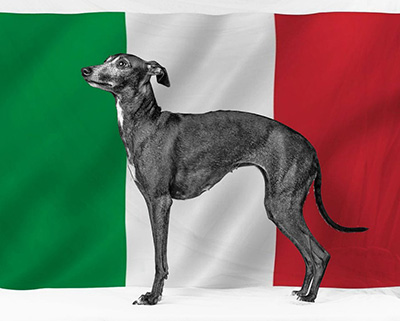 top-Italian-Boy-Dog-Names